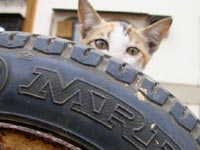 Tyre with muscle and a kitten