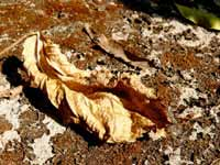 Public transport is for losers - An image of dead leaf in a park in Andheri, Mumbai
