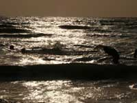 Arabian Sea - An image of the Arabian Sea at Aksa beach