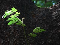 Let's try something different - An image of leaves on a tree in Sanjay Gandhi National Park, Mumbai