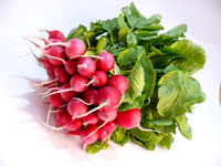 Half for Radish, half for leaves - A bunch of radishes